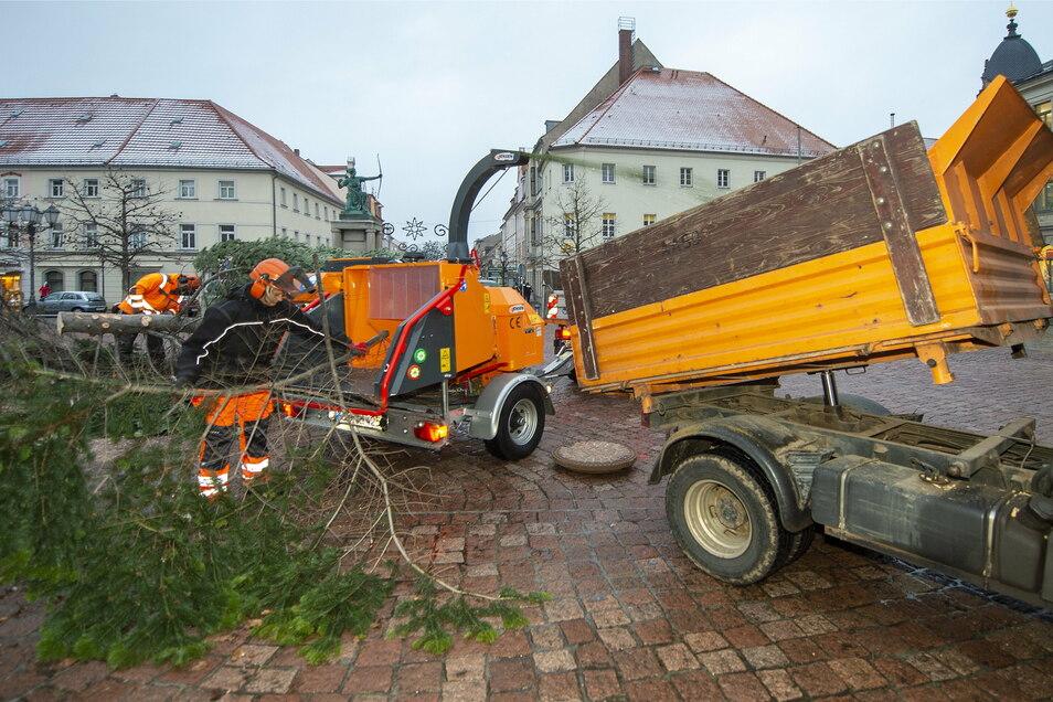 Mitarbeiter des Großenhainer Stadtbauhofes haben am Freitag den Weihnachtsbaum auf dem Hauptmarkt zersägt und geschreddert.