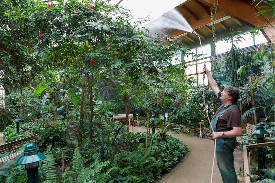 Die Pflanzen in der Tropenhalle des Jonsdorfer Schmetterlingshauses brauchen auch im Lockdown Wasser und Pflege.