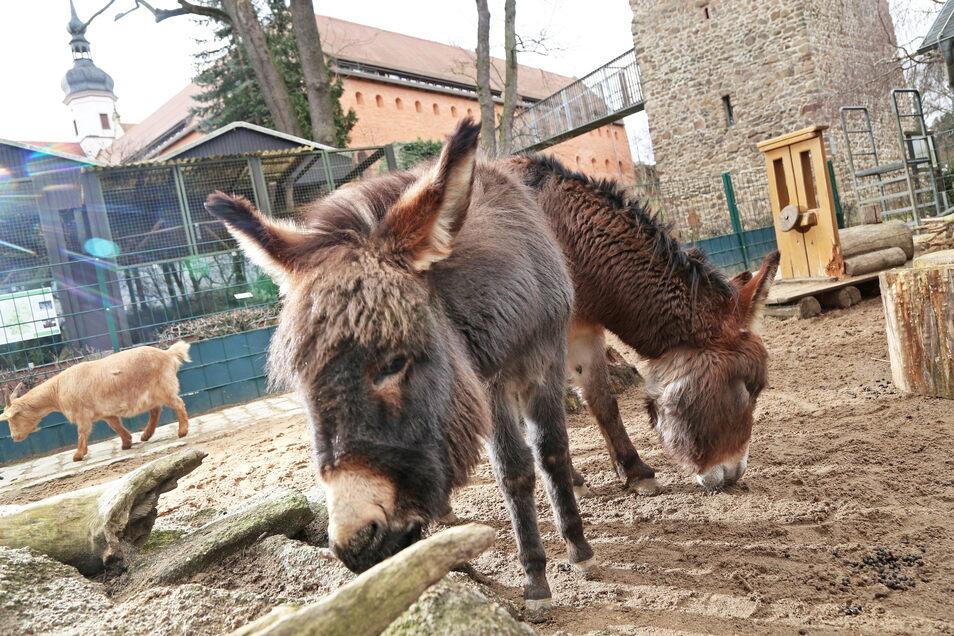Die Tiere im Klostertierpark können bald wieder aus der Nähe bestaunt werden.