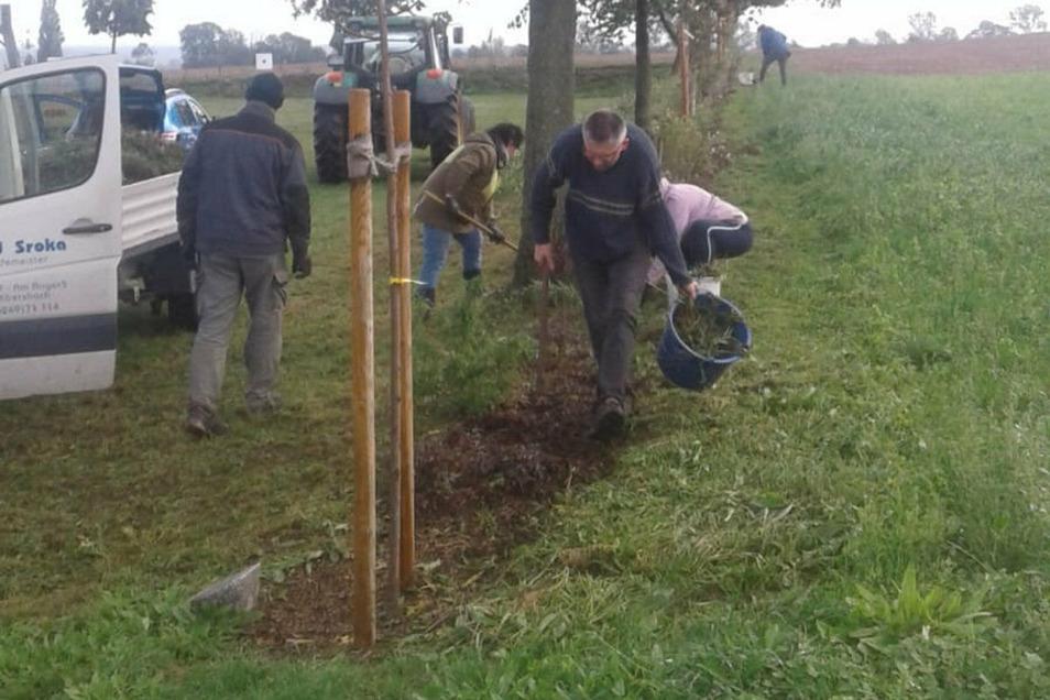 In Reinersdorf macht der Heimat- und Traditionsverein vorbildlich vor, dass man Bäume nicht nur pflanzen darf, sondern auch pflegen muss.