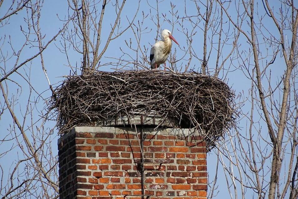 Am vergangenen Wochenende ist der erste zurückgekehrte Weißstorch im Landkreis Bautzen gesichtet worden. Zu früh sei das nicht, sagen Vogelkundler.