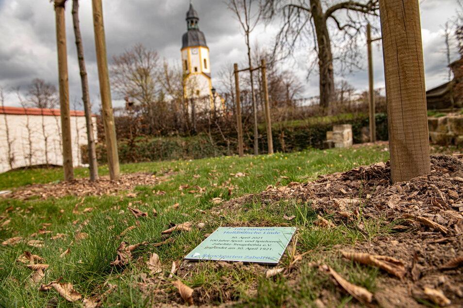Eine der holländischen Linden am Eingang zum Zabeltitzer Schlosspark spendet der Verein zu seinem Jubiläum.
