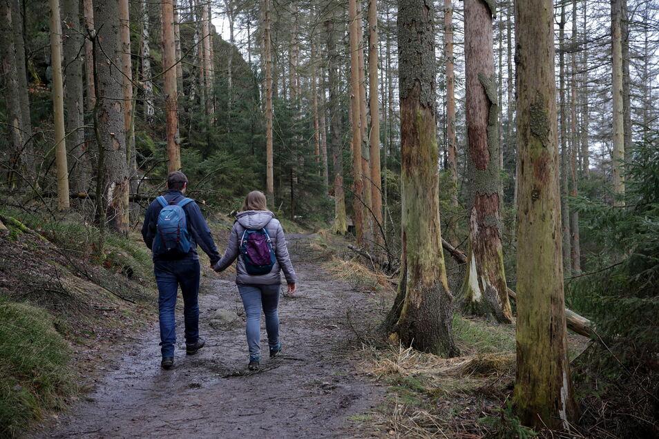Der Malerweg durch die Sächsische Schweiz verläuft auch auf der Oberen Affensteinpromenade. Tote Fichten drohen über den Weg zu brechen.