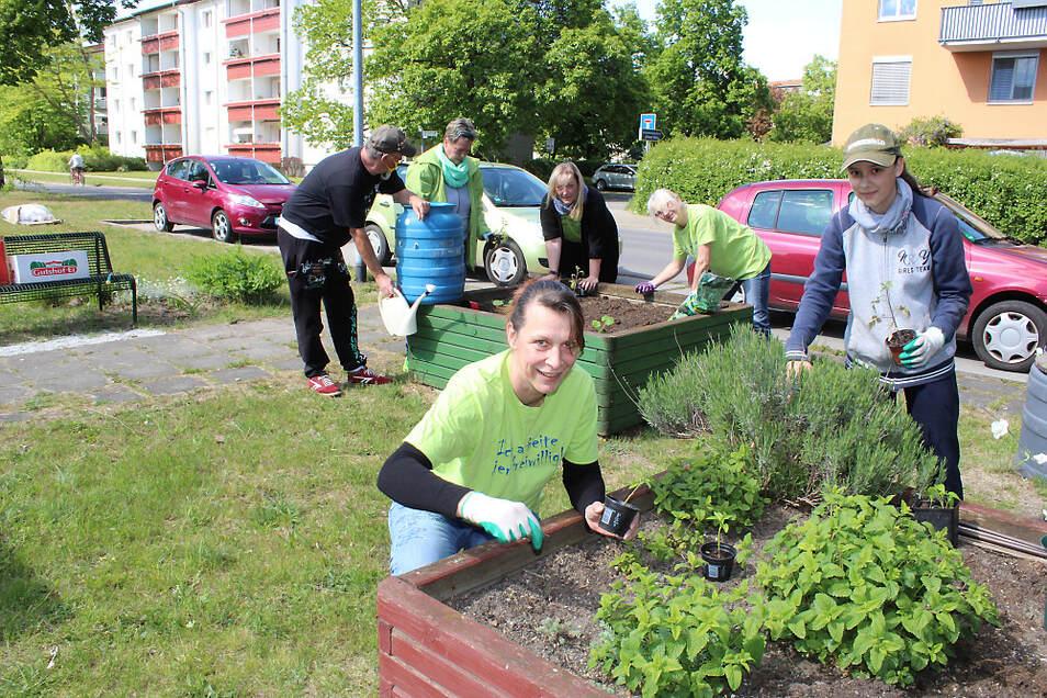 Pflanzen, gießen und pflegen. Die Stadtwunder-Initiatoren kümmern sich liebevoll um die Hochbeete in der Hufelandstraße. Wer mag, kann sich auch gern engagieren.