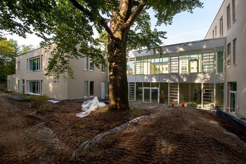Neuer Anbau am Pirnaer Schiller-Gymnasium: Das Gebäude wurde um einen bestehenden Baum herum geplant.