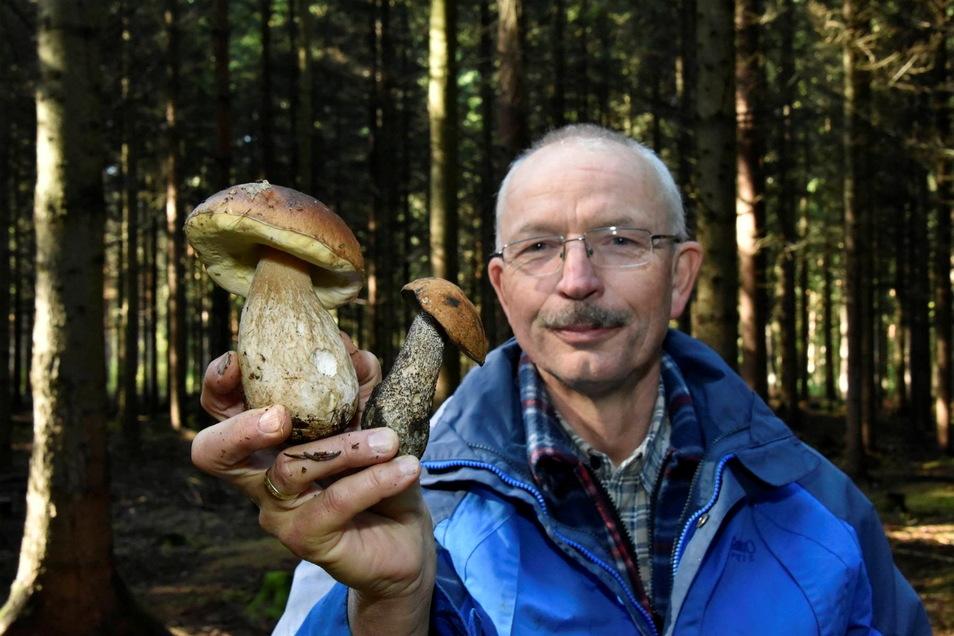 Pilzberater Gunter Redwanz zeigt hier in der Dippser Heide einen Steinpilz und eine Rotkappe. Am Sonntag gibt es in der Pilzausstellung die Möglichkeit, auch seltene Exemplare bestimmen zu lassen.