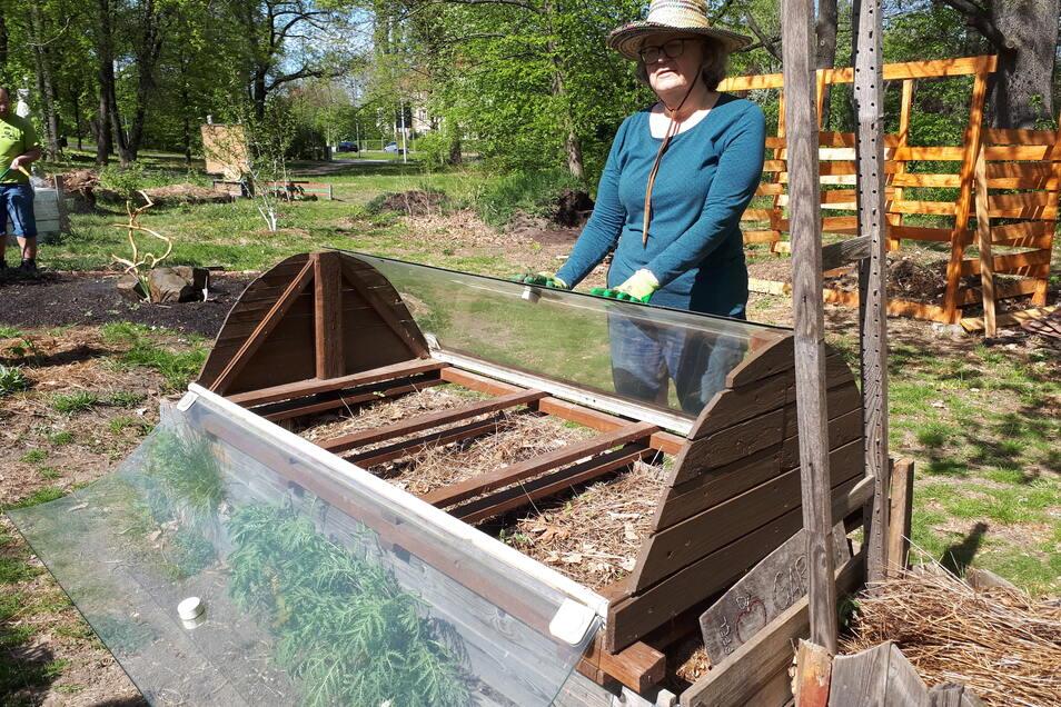 Jenny ist US-Amerikanerin, lebt seit zwei Jahren in Dresden und gärtnert leidenschaftlich gern. Ihr Highlight im Apfelgarten: Das Frühbeet, das aus einer Duschkabine gebaut wurde.
