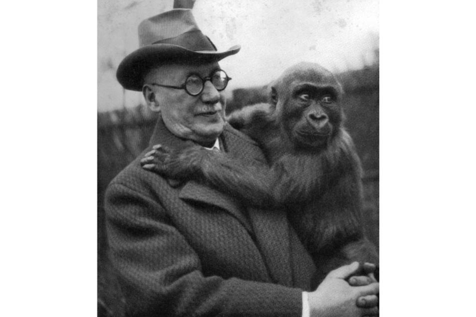 Professor Gustav Brandes mit Gorilla
