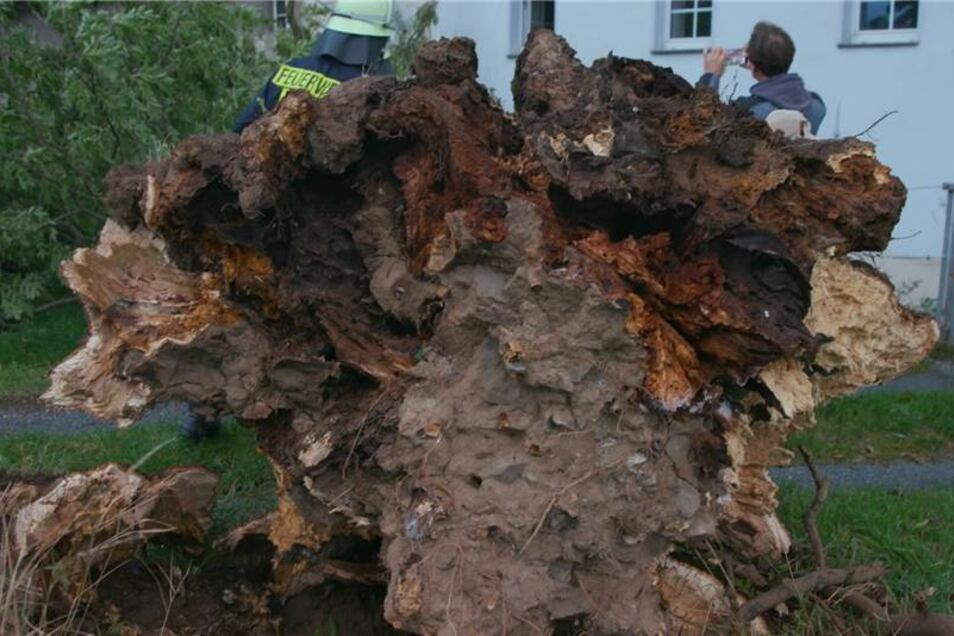 Die Wurzeln hatten den Baum nicht halten können.