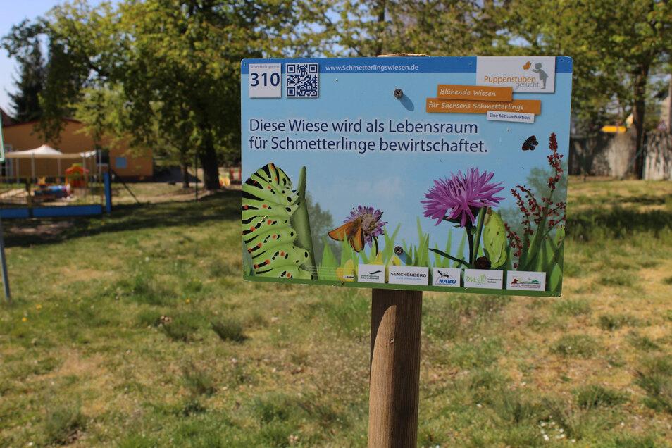 Dieses Schild auf der Wiese hinterm Kita-Gelände weist auf das Projekt der Straucher Kindergartenkinder hin.