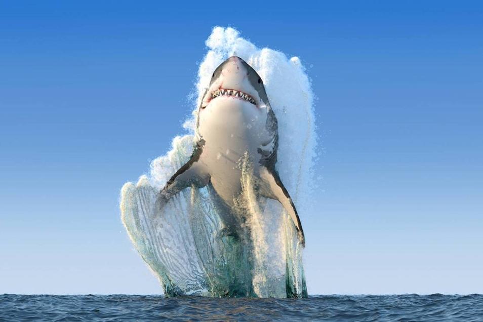 Was macht der Hai in Kamenz? Unsere Ausstellung der Woche löst das Rätsel.