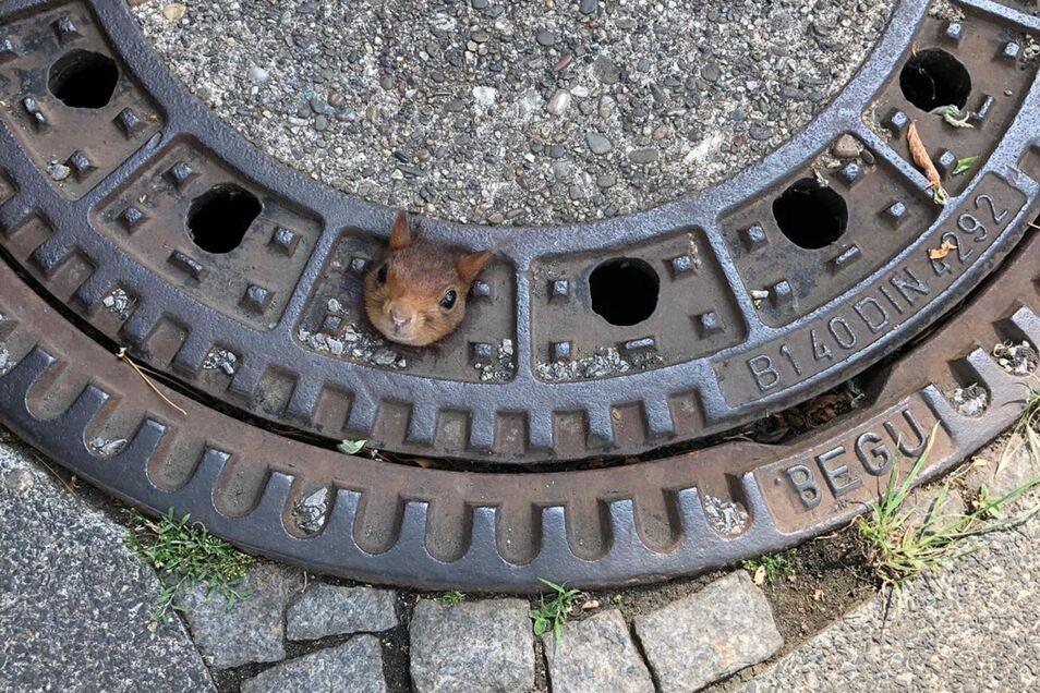 Ein Eichhörnchen in Not.