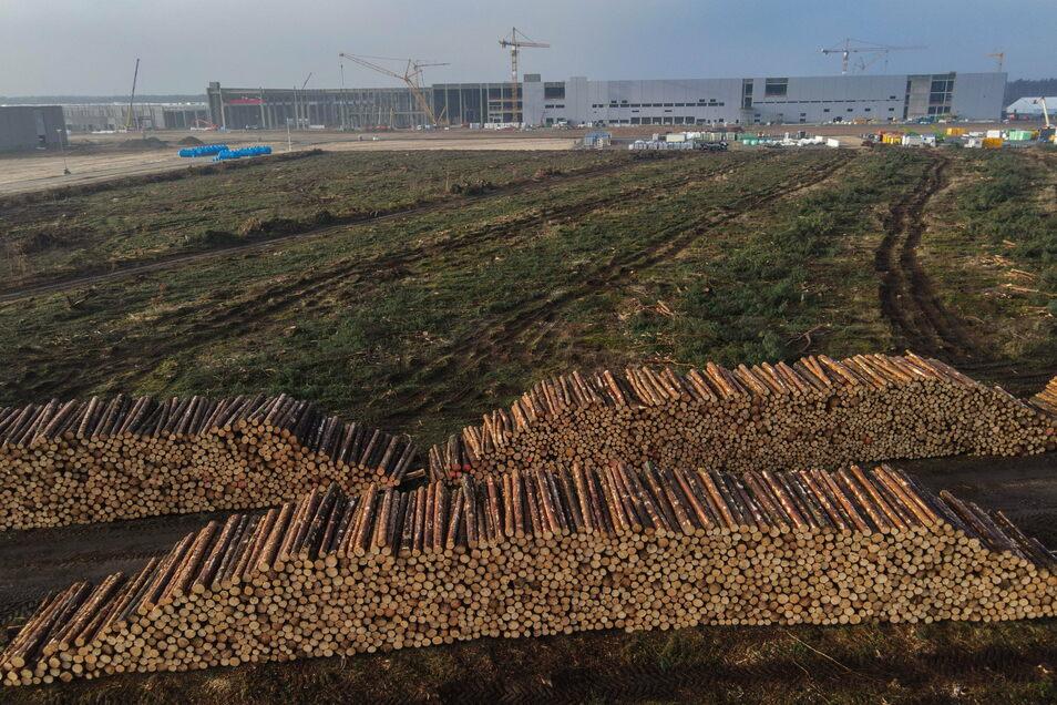 Bereits abgeholzt ist eine weitere Fläche Kiefernwald auf der Baustelle der Tesla Gigafactory.