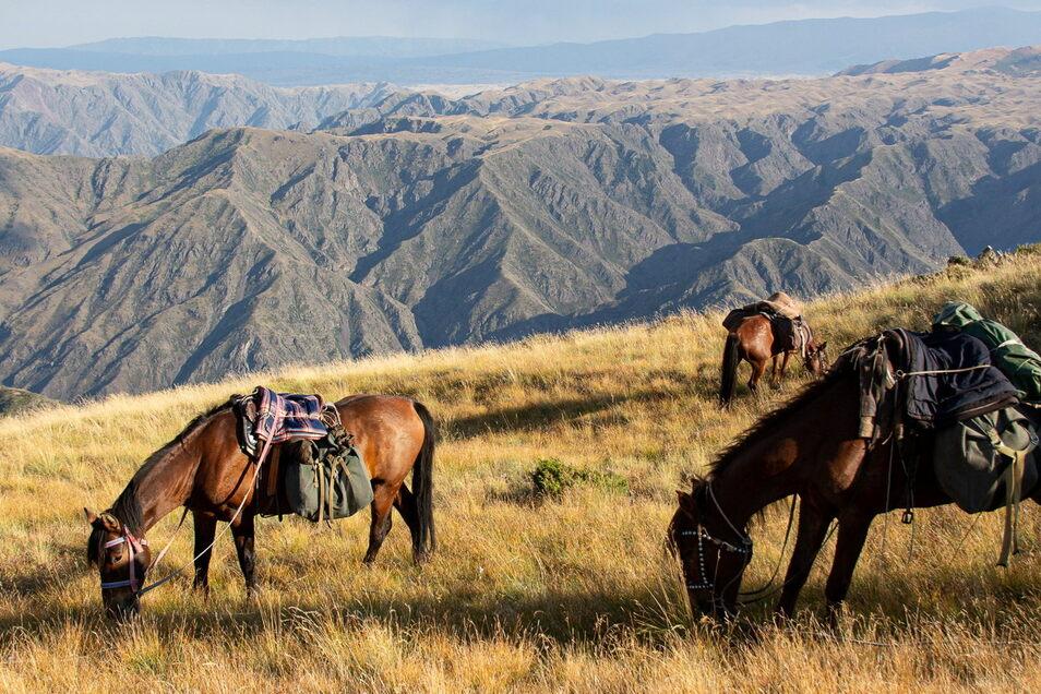 Voll bepackt ging es mit den Gebirgspferden durch das Kasachische Hochgebirge.