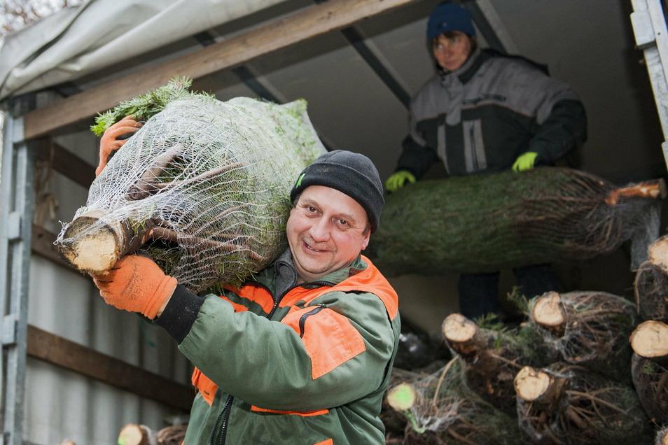 Noch ist der große Verkauf noch nicht gestartet, aber die ersten Bäume hat Hans-Jörg Winkler von der gleichnamigen Baumschule in Priestewitz schon an die Interessenten gebracht.