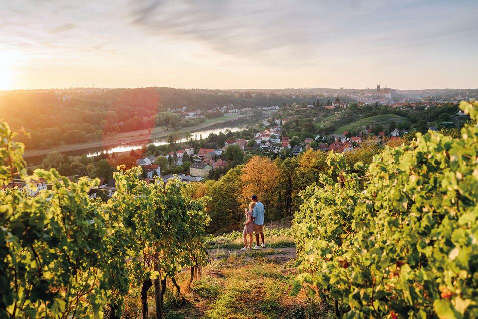 Sonnenuntergang auf einem Weingut bei Meißen.