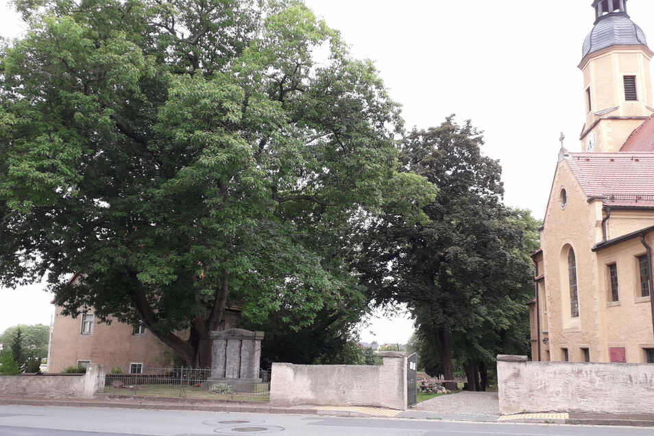 Die Baumkrone der alten Eiche ist gewaltig und ragt auch über die Straße und ein Nachbarhaus.