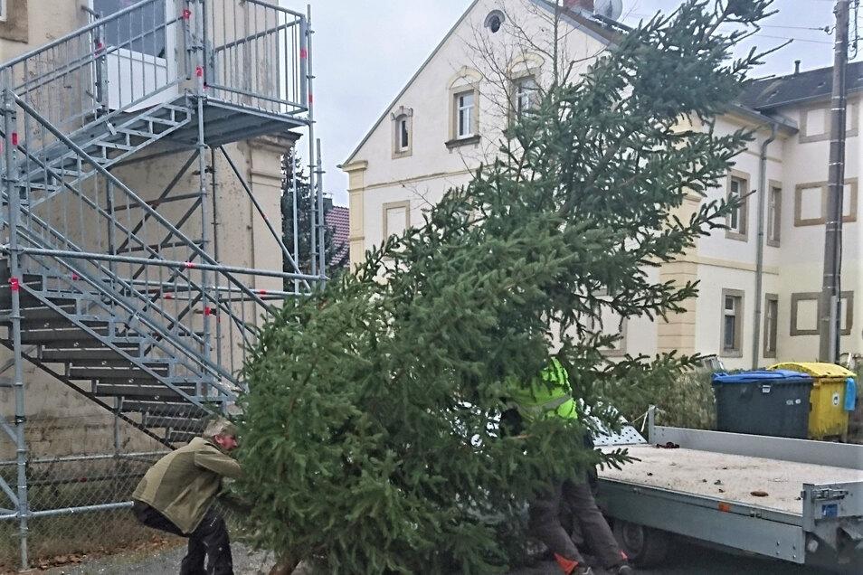 Weihnachtsbaum an der Grundschule Zehista: Das Bäumchen hatte einen berühmten Nachbarn.
