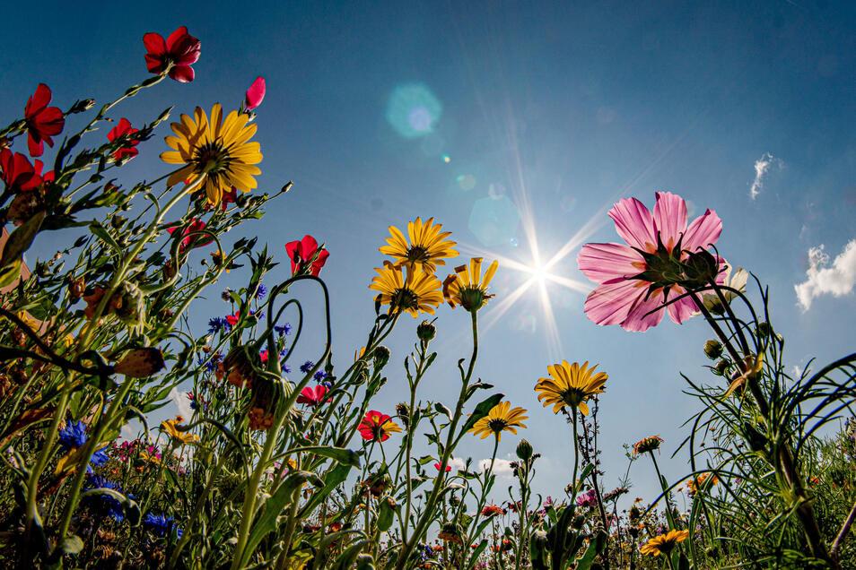 Blütenpracht und noch viel mehr können Interessenten beim Tag der offenen Gartenpforte in Kamenz bewundern, der am 14. Juni stattfinden soll.