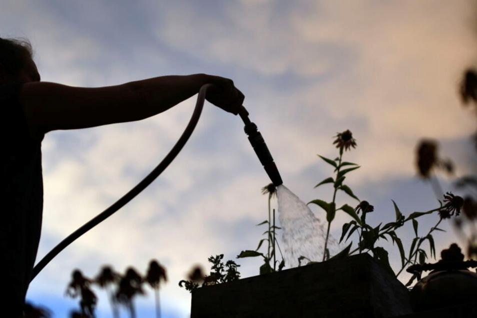 Im Sommer empfiehlt es sich, Pflanzen am besten früh morgens oder nach Sonnenuntergang zu gießen gießen - und auf keinen Fall, wenn die Sonne herunterknallt.