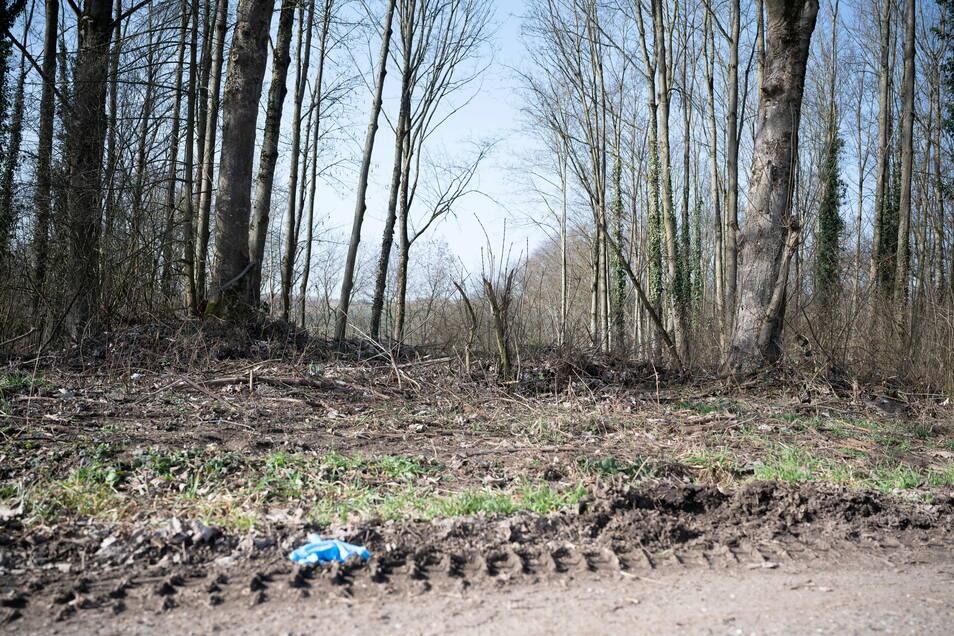 Ein Waldstück, in dem sich der mutmaßliche Tatort befindet.