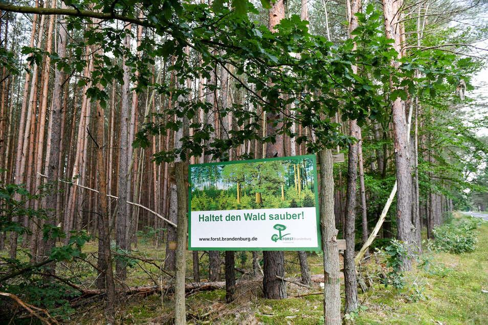 Gartenabfälle gehören nicht in den Wald. Wer sie dort entsorgt, muss mit einer saftigen Geldstrafe rechnen.
