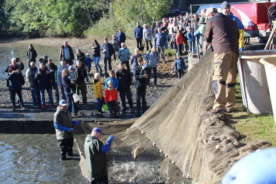 Zahlreiche Besucher verfolgen den zweiten Fischzug. Mit einem großen Netz sind die Fische bis ans Ufer gezogen worden. Dort werden sie aus dem Netz geholt und in große Transportbehälter umgesetzt. Teichwirtschaft-Chef Thomas Richter (rechts, blau-gelbe Ja