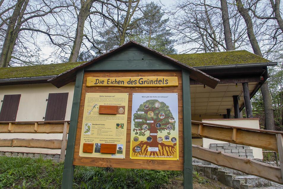 Auch den Eichen des Gründels ist bereits eine Schautafel gewidmet.