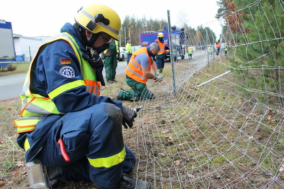 Bollwerk gegen Wildschweine: Pirnaer THW-Helfer errichten im Kreis Görlitz einen Maschendrahtzaun.