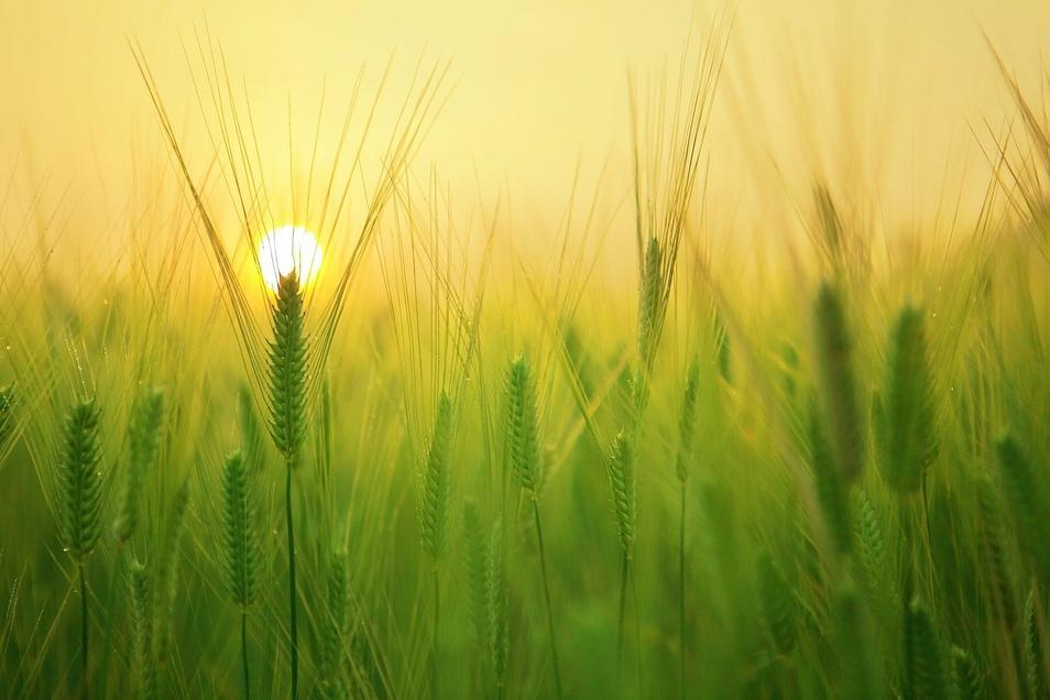 Wie sieht die Welt von morgen aus? Was wird es zu essen geben? Wie wird es hergestellt? Und kann das alles nachhaltig sein?