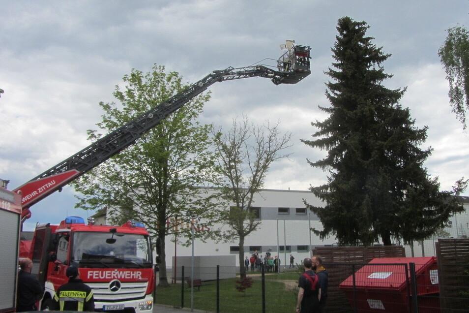 Bis an die Baumspitze musste die Feuerwehr den Rettungskorb mit der Imkerin und einem Kameraden darin ausfahren.