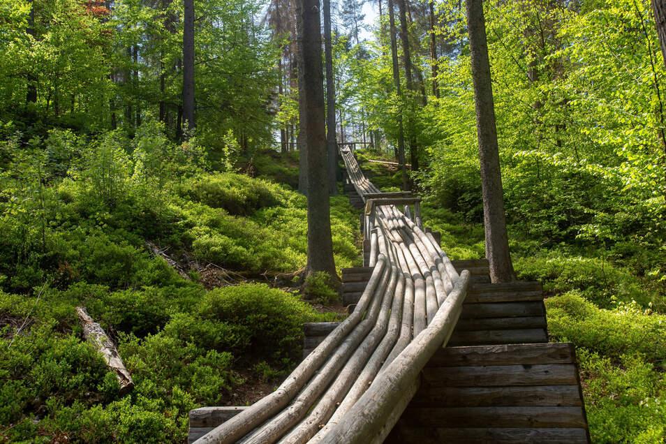 Die eigentliche Husche: Eine Baumrutsche, die dem Gelände seinen Namen gab. So wurden früher die gefällten Stämme zu Tale befördert.