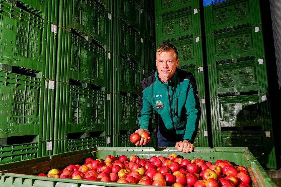 Michael Görnitz, der Geschäftsführer des gleichnamigen Obstbaubetriebes in Neusörnewitz, zeigt eine der Kühlzellen, in der die Früchte bis zu einem halben Jahr gelagert werden können.