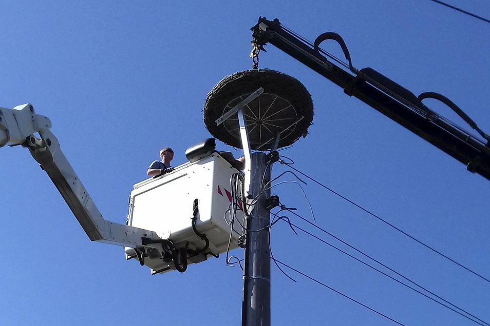 Ein neues Nest für ein Storchenpaar in Bretnig: Auf einem Strommast wird eine Nestunterlage montiert.