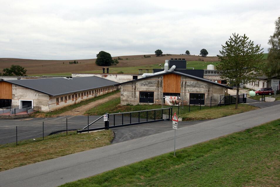 In der ehemaligen Schweinemastanlage bei Stolpen werden jetzt 4 500 Ferkel gemästet.