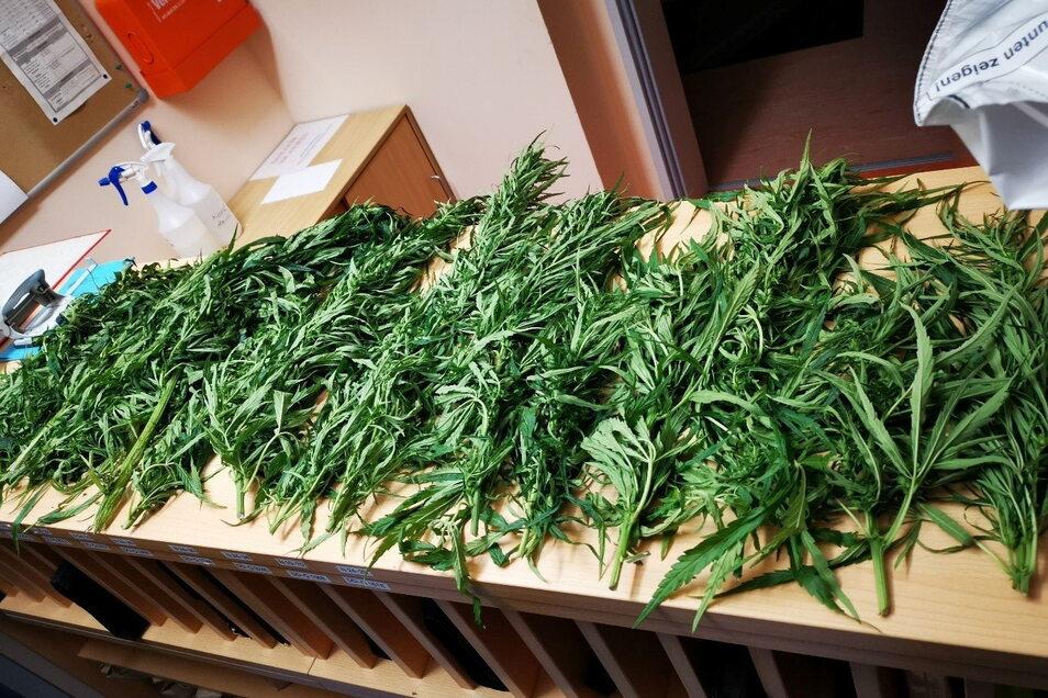 Ein Kilo Marihuana fanden Polizeibeamte auf Streife Montagabend in Zittau.