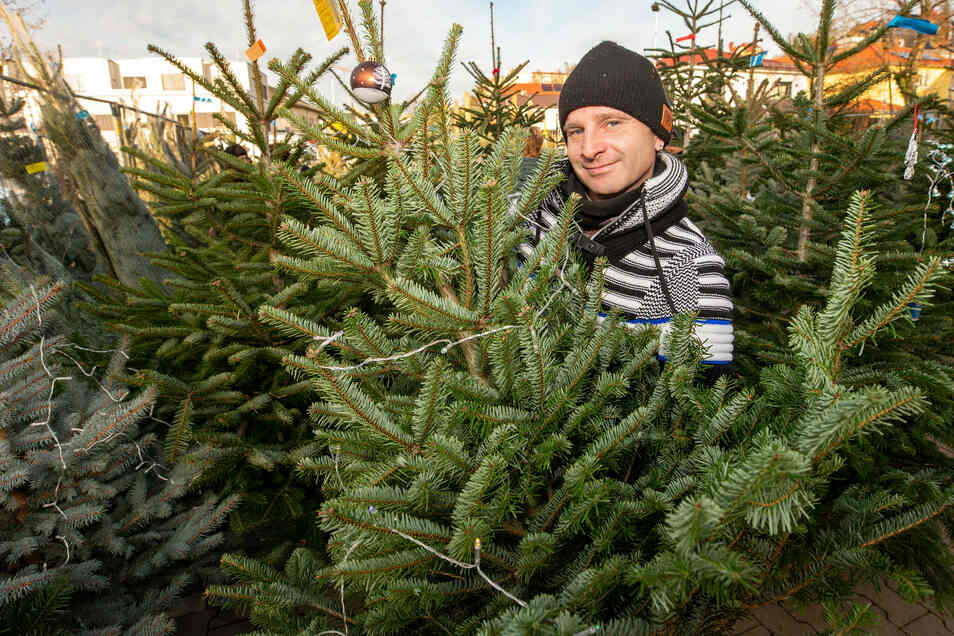 Zumindest auf einen Weihnachtsbaum wird man dieses Jahr nicht verzichten müssen.