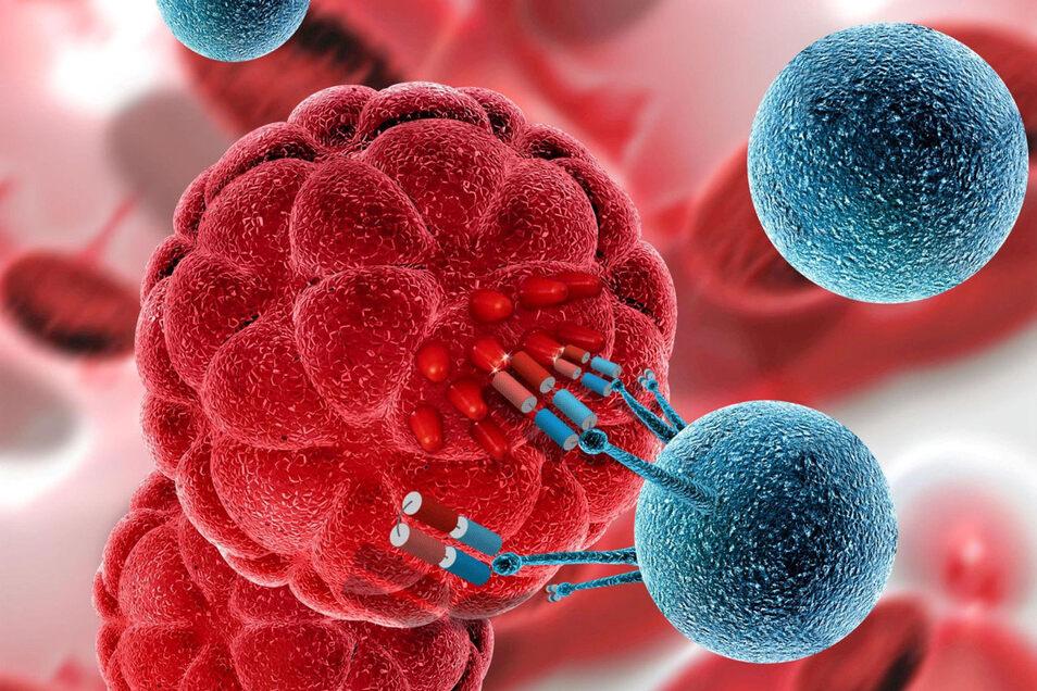 Bei der UniCAR-Technologie bindet die T-Zelle (blau) über ein künstlich erzeugtes Bindeglied an die Tumorzelle (rot). Anhand der Dosierung des Bindeglieds lässt sich die Immunantwort steuern.