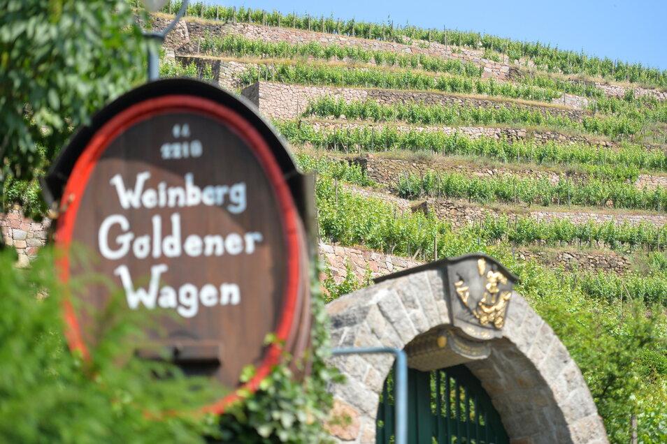 Das wird als Sachsens beste Weinlage bezeichnet - der Goldene Wagen in Radebeul, Oberlößnitz.