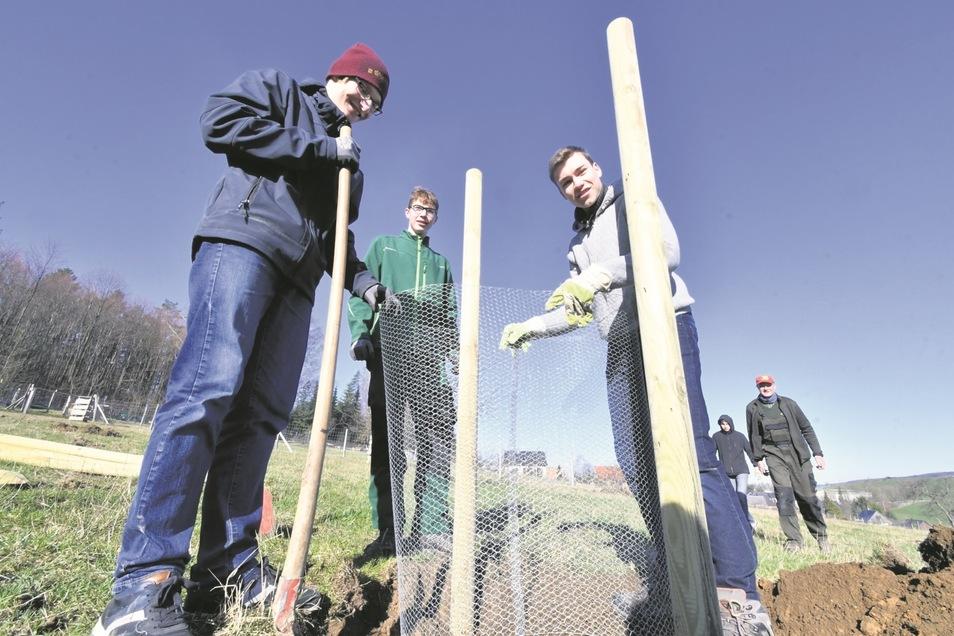 Matthias, Theo und Lukas (v.l.n.r.) sind Zehntklässler aus dem Sebnitzer Goethe-Gymnasium. Sie haben unlängst in Hinterhermsdorf Bäume gepflanzt.