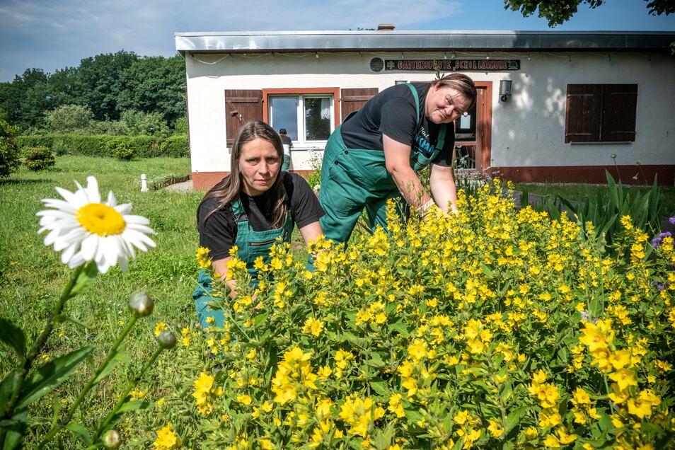 """Frauen des Projektes """"Schritt für Schritt"""" kümmern sich auch um die Blumenrabatten auf dem Vereinsgelände der Gartensparte Schillerhöhe."""