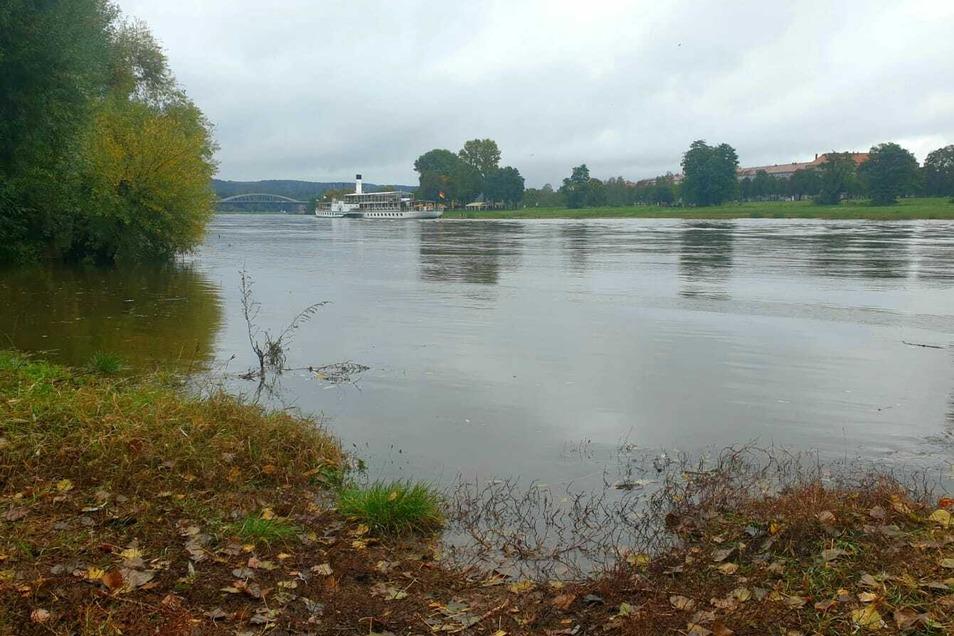 Die Elbe - hier an der Prießnitzmündung in Dresden - könnte den Pegel für Hochwasser-Alarmstufe 1 erreichen.