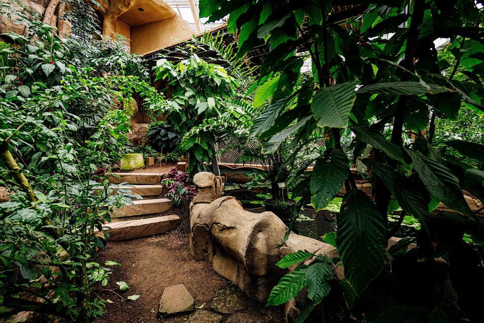 Palmen, Jackfruchtbäume, Bananenstauden und Schlangen gibt es im Urwaldhaus Danakil in Erfurt.