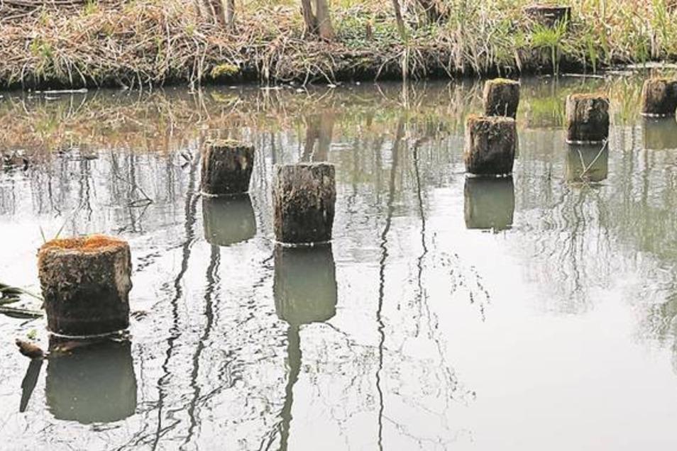 In Burg im Spreewald ist die Wasserwelt noch in Ordnung. Das graugrüne Wasser umspült ruhig die alten Holzpfähle.