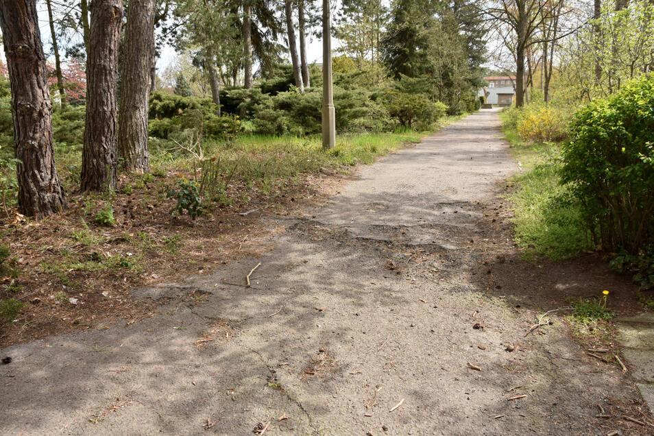 """Wurzeln haben den Weg von der Lutherstraße in Richtung """"Olympia"""" verworfen. Die Stadtverwaltung überlegt, ihn gänzlich aufzugeben."""