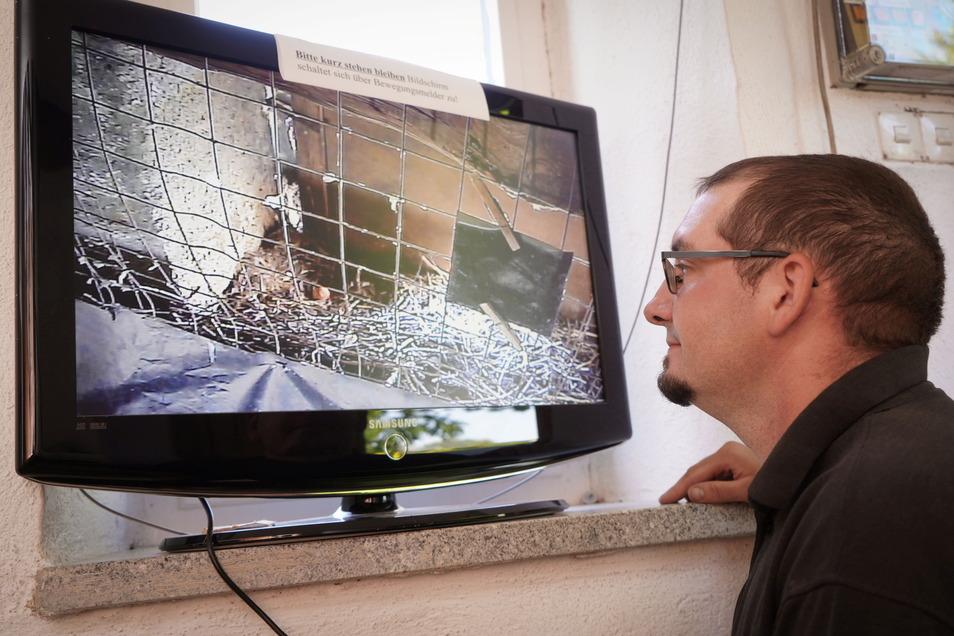 Christian Kühnel schaut in der Kirche in Putzkau auf einen Fernsehbildschirm, auf dem das Bild einer Videokamera aus dem Kirchturm zu sehen ist. Es zeigt die Nisthöhle eines Turmfalken, der dort ein Ei abgelegt hat.