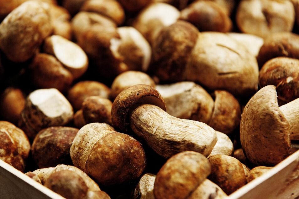 Wer mehr Steinpilze gefunden hat, als er sofort essen kann, kann sie im Backofen trocknen.