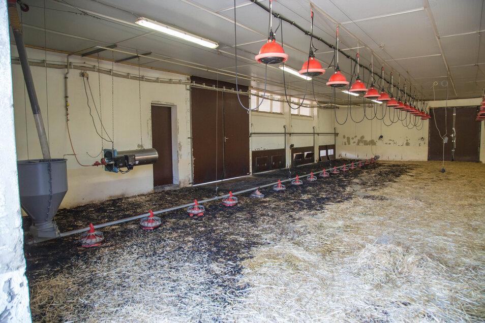 Brand in der In der Geflügelfarm der Eskildsen GmbH in Kreba. Rund 1.000 Gänseküken verloren dabei am vergangenen Freitag ihr Leben.