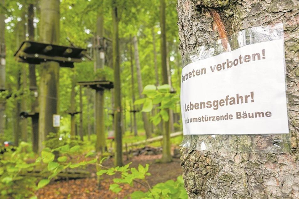 Mehrere Gutachter haben sich nach dem Orkan im März den Waldseilpark an der Talsperre Malter angesehen.