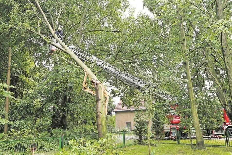 In Neusorge fällt bei dem Unwetter ein Baum auf die Stromleitung. Die Anwohner müssen eine Zeit lang ohne Strom auskommen. Dazu zählt Siegfried Steinert (kleines Foto oben), der alles mit der Kamera festhält. Foto: André Schulze